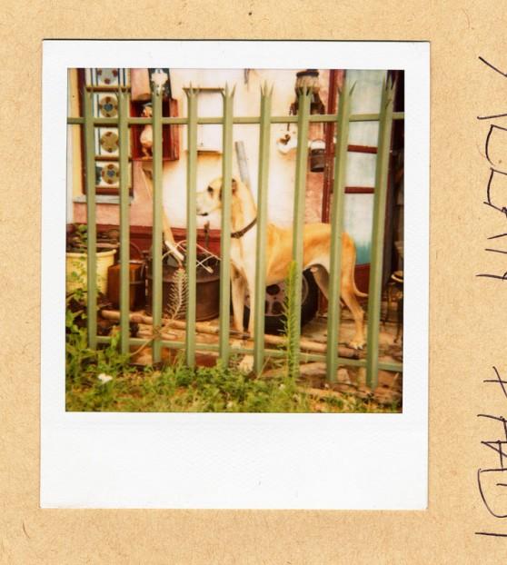 paris-dog-558x622