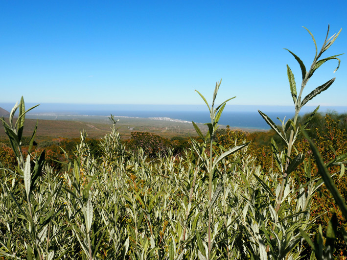 grootbos-nature-reserve-15