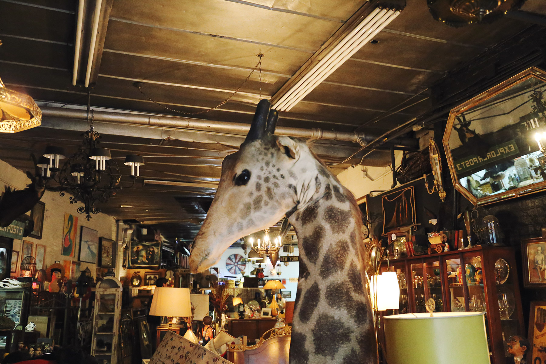 eclectic-collectibles-and-antiques-11