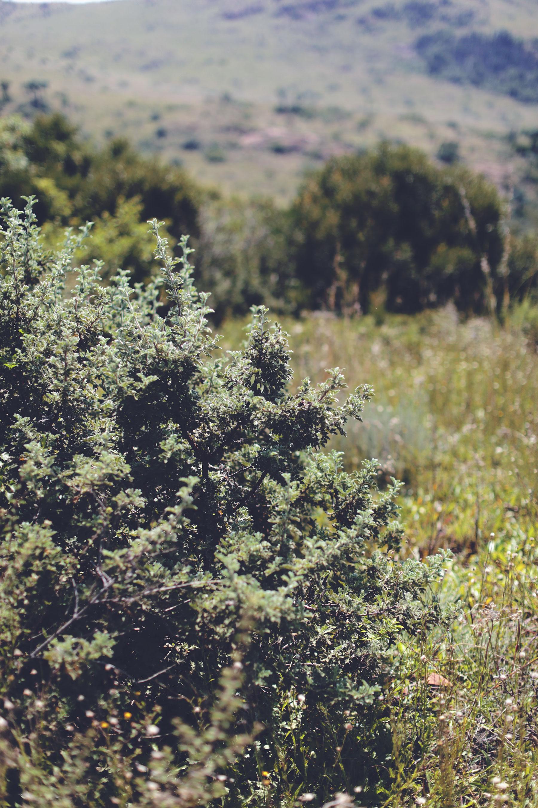 suikerbosrand-nature-reserve-10