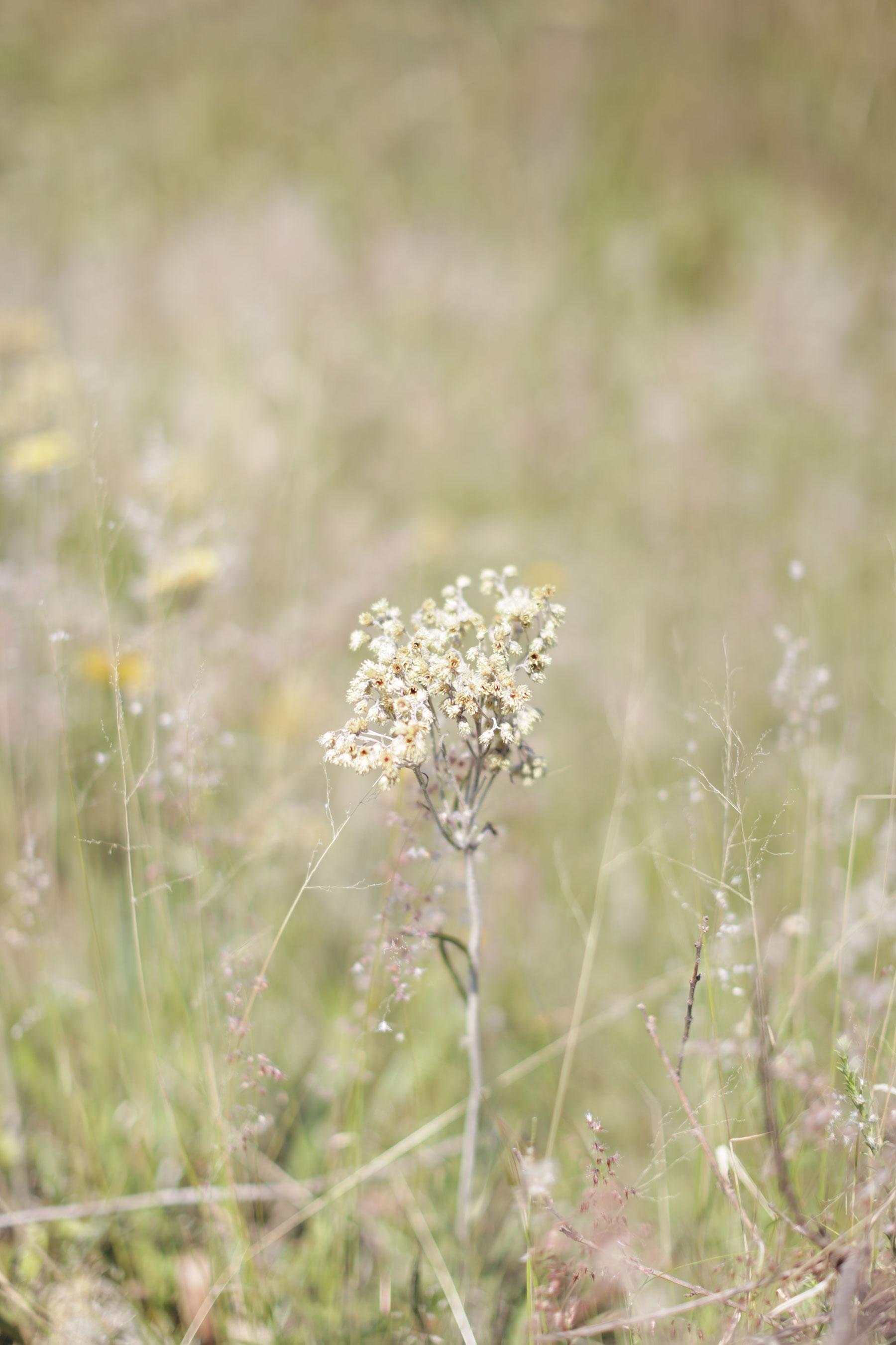 suikerbosrand-nature-reserve-7